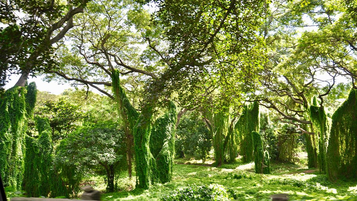 Der Parque Almendares: Eine Ruheoase mitten in der Stadt