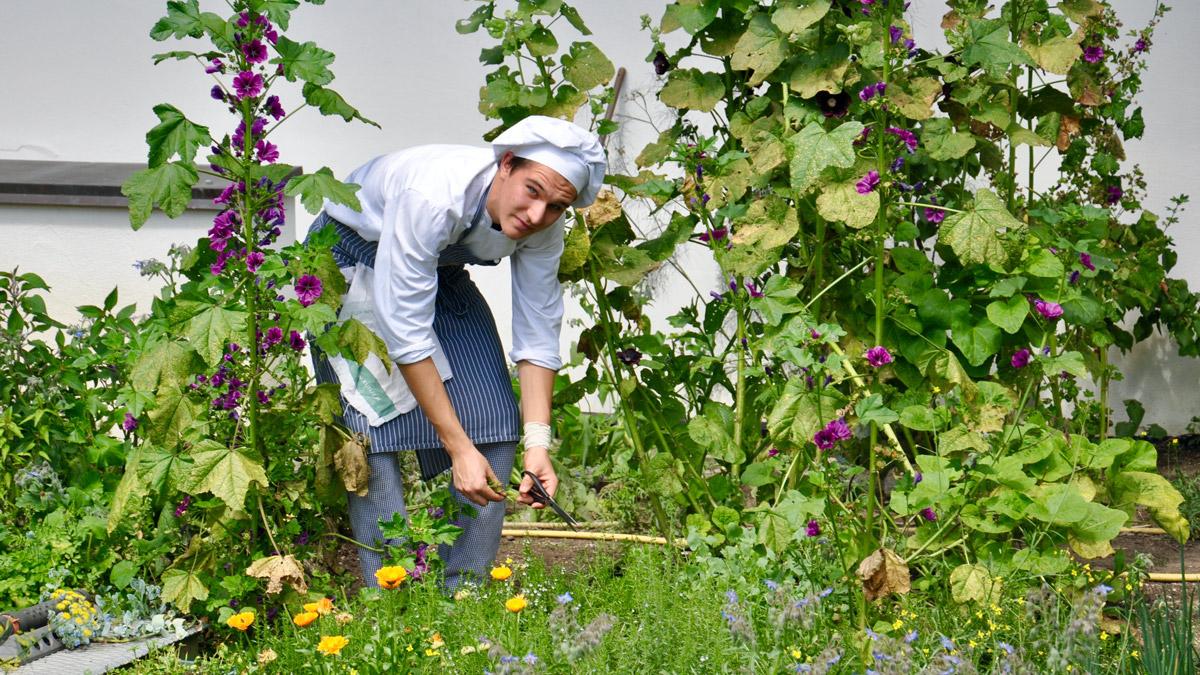 Frische Kräuter kommen aus dem eigenen Garten. Foto WR