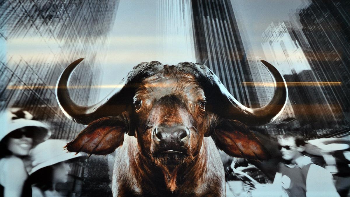 Wasserbüffel in New York. Fotomontage von Norbert Schäfer. Foto HvF