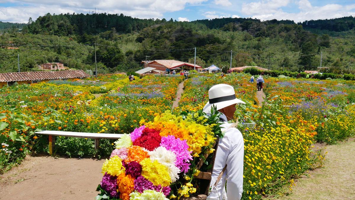 Blumenfarm in den Bergen von Medellin