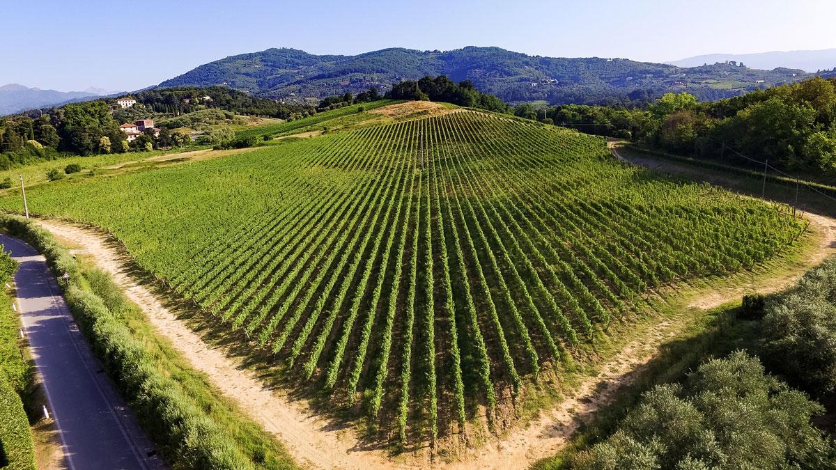 6,5 Hektar Weinberge sind bepflanzt mit Cabernet Sauvignon, Cabernet Franc, Merlot, Sangiovese und Vermentino. Foto Massimo Tessandori Bernini