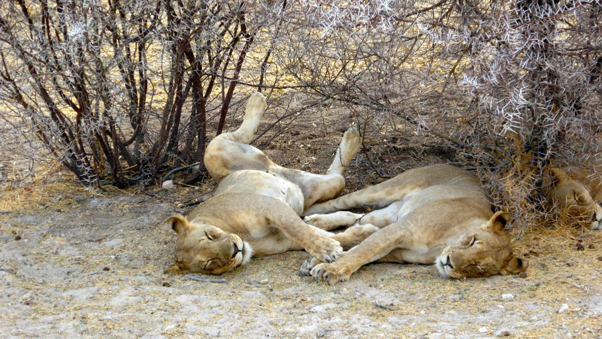 Etosha Nationalpark. Foto Inna Hemme