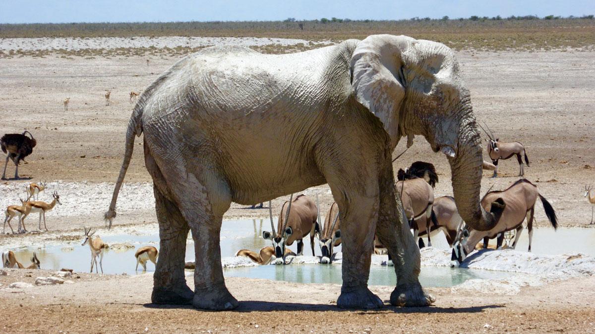 Etosha Nationalpark - Wasserstelle. Foto Inna Hemme