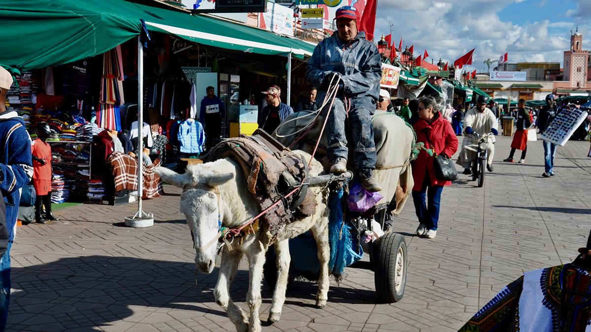 Ohne Eselkarren geht nichts in der Medina. Foto WR