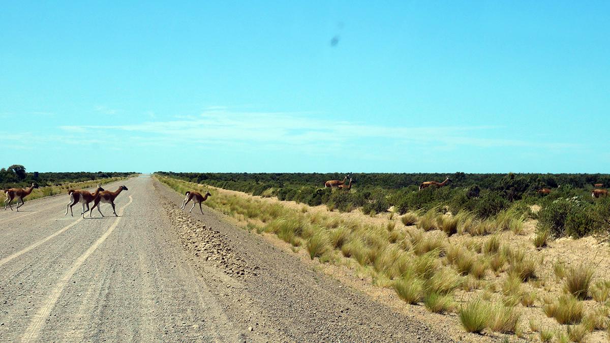 Auf dem Weg nach Punta  Tombo. Foto JW