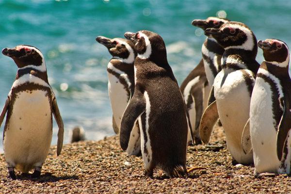 In Punta Tomba, der Stadt der Pinguine. Foto JW
