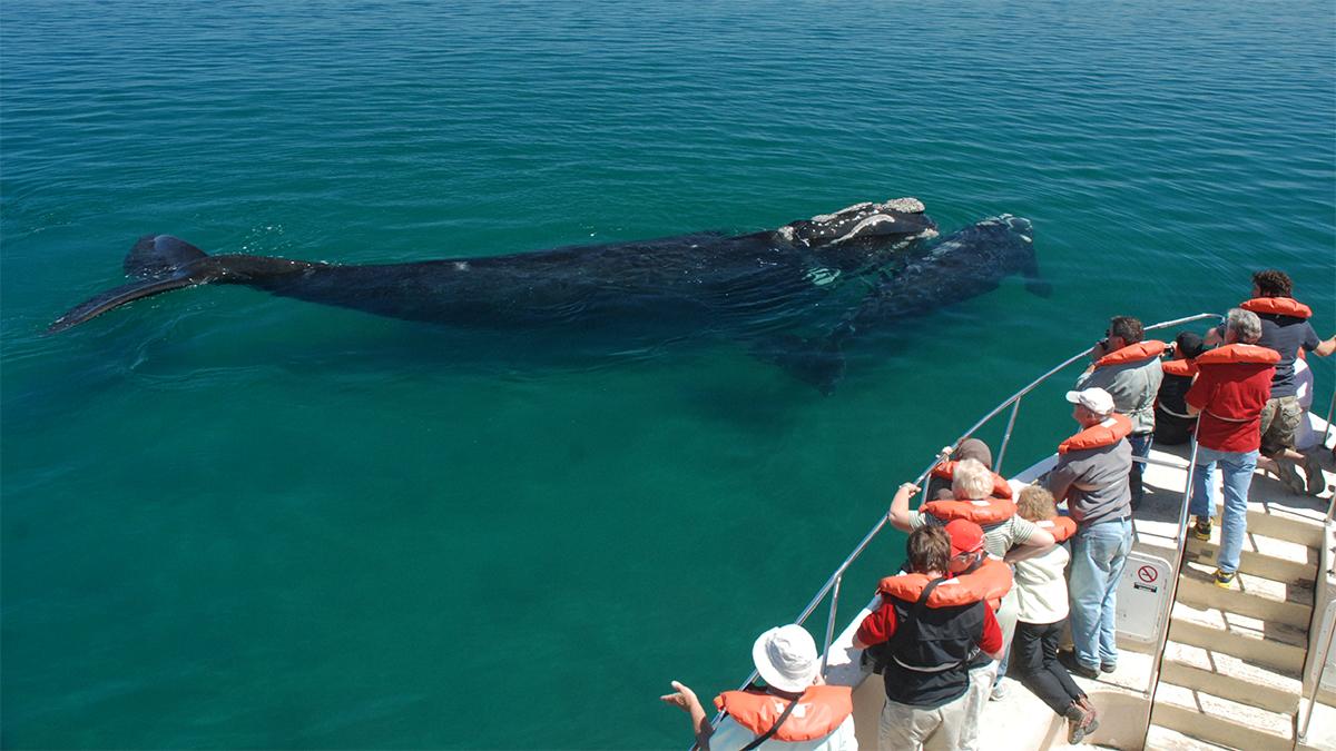 In Puerto Piramides lassen sich im Winter Wale aus nächster Nähe beobachten. Foto JW