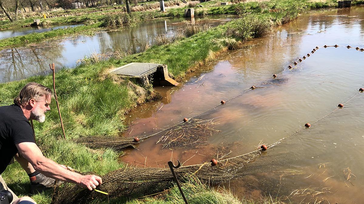 Aus dieser Fischzucht von Matthias Engels bezieht Marco Müller seine Fische. Zwei Teiche stehen ihm hier exklusiv zur Verfügung. Foto Marco Müller