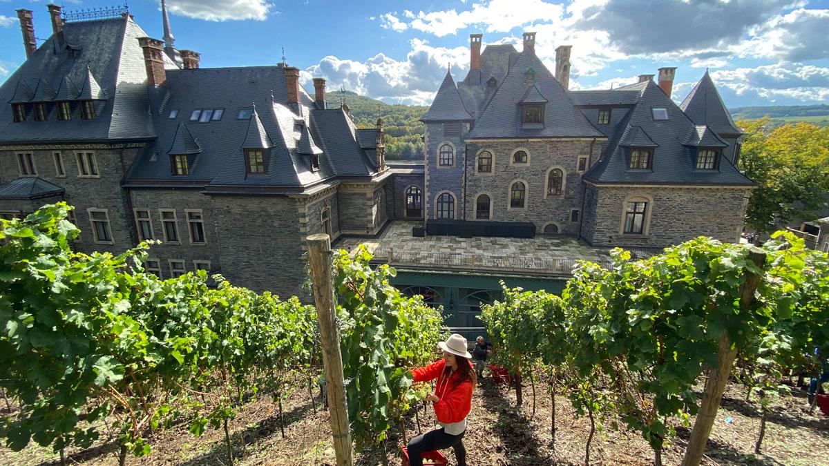 Am Hang von Schloss Lieser wachsen etwa 1000 Reben (Foto: Hemme)