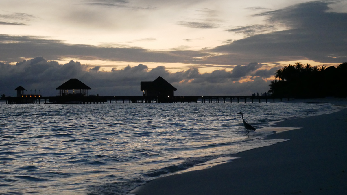 Morgenstunden auf dem Baa Atoll des Seaside Finolhu. Foto: Jürgen Wenzel